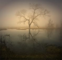 Foggy symmetry | Landscape photos