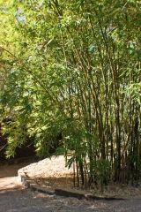 Zen Minimalist Gardens on Pinterest Minimalist Garden
