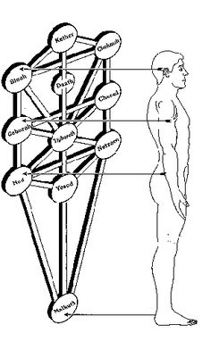 Tree of Life in the Human Body