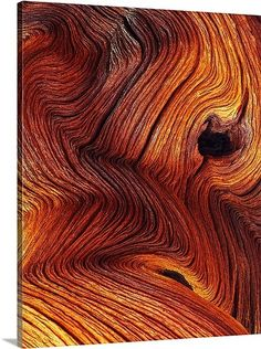 Woods Photography, Texture Photography, Micro Photography, Beauty Photography, Art Texture, Wood Texture, Natural Texture, Natural Colors, Patterns In Nature