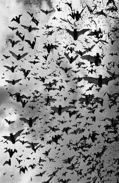 That's a lot of bats...