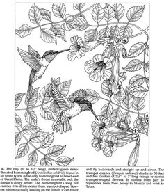 Fabulous Photo Coloring Book 42 Dover Coloring Book Pages