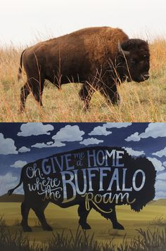 Oh, give me a home where the buffalo roam. :) I should put this on a wall in my home Buffalo Tattoo, Buffalo Shirt, Bison Print, Buffalo Animal, Wood Badge, Majestic Animals, Wild West, Spirit Animal, Wyoming