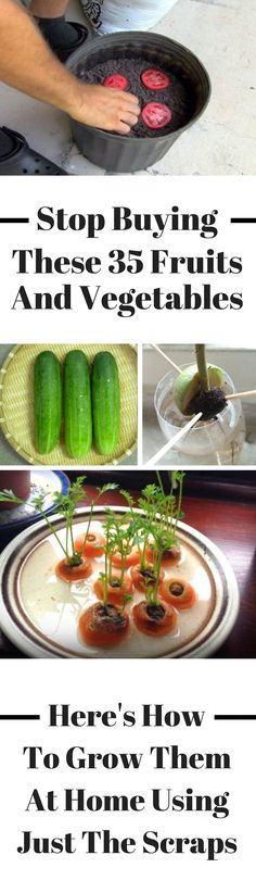 Container Gardening For Beginners Here's how to grow fruits and vegetables at home using just the scraps. You can grow some of these in pots and other in plastic containers - the biggest this is that all you need are the scraps to start! Regrow Vegetables, Fruits And Vegetables, How To Grow Vegetables, Growing Vegetables In Pots, Organic Vegetables, Gardening For Beginners, Gardening Tips, Gardening Zones, Flower Gardening