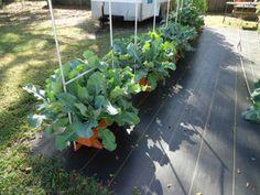 A Earthbox garden in Florida