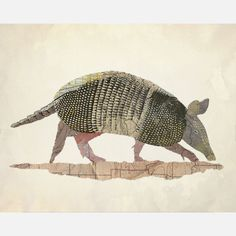 Texas Armadillo by Jason LaFerrera;  Composed from old historic maps of Texas, this foraging armadillo is elevated from a burrowing nuisance into a refined and elegant creature. Roadways, train routes, and geographic landmarks like lakes and parks become a palette of colors and textures that bring depth, dimension, and character to the flattened form. Limited-edition print.