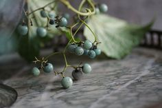 porcelain berries