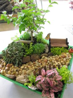 1000 images about miniature garden on pinterest for Indoor gardening diana yakeley