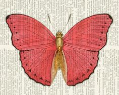 butterfly - pink and gold vintage butterfly printed on page from old dictionary