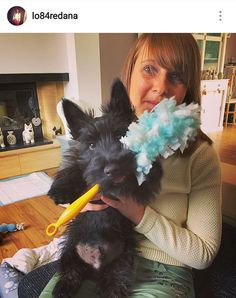Scottish Terrier Puppy, Terrier Dogs, Cairn Terrier, Rescue Dogs, Pet Dogs, Doggies, Baby Otters, West Highland Terrier, Cute Baby Animals