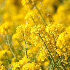 Papers.co wallpapers - mq16-yellow-flower-spring-fun-nature - http://papers.co/mq16-yellow-flower-spring-fun-nature/ - flower, mountain