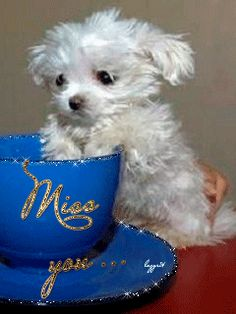 MISS YOU (LITTLE WHITE DOG)