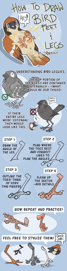 How to draw bird legs/feet