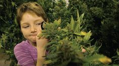 Pediatric cannabis therapy is saving children. Oregon's Youngest Medical Cannabis Patient Is Curing Her Cancer. The anti-tumor effects of cannabinoids & THC have been demonstrated for quite some time now. Studies have shown that cannabis completely kills cancer cells, & it has a great impact on rebuilding the immune system. Cannabis has the potential to replace a multitude of pharmaceutical drugs.
