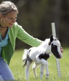 Einstein is the smallest horse in the world at just 14 inches in height. http://ift.tt/2okFrTB