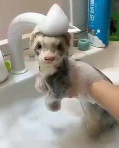 Ferret Bath Time
