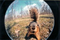 Fisheye squirrel