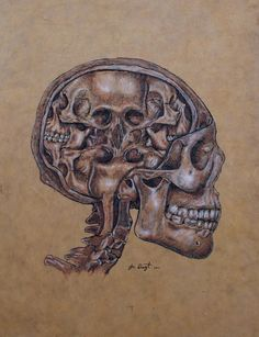 Anatomy Of A Schizophrenic Canvas Print / Canvas Art by Joe Dragt Anatomy Art, Anatomy Drawing, Human Anatomy, Sombre, Weird Art, Strange Art, Halloween Skull, Skull Art, Art Google