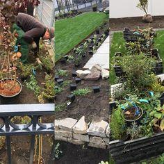 #Herbst ist #Pflanzzeit! #Azubi Sascha hat heute und morgen alle Hände voll zu tun, Um aus einer tollen Anlage einen richtigen #Garten zu zaubern. Das Ergebnis zeige ich euch am Montag! Seid gespannt! #grünindiestadt #nurdiehartenkommenindengarten #gärtnerausleidenschaft #ausbildungbeigartenbauthuir Fresh Green, Garden Planning, Landscaping, Mornings, Fall