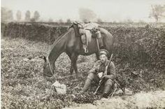 Image result for veterinary treatment for battle horse