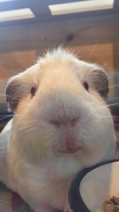 Love my piggies!❤