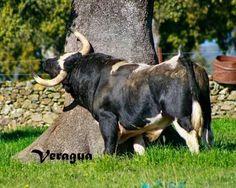 Vega Villar