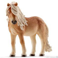 Icelandic Pony mare