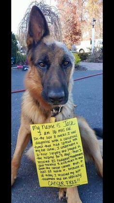 Meet Jalk, the wonder pup.