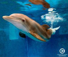 Winter Dolphin  (Facebook via Clearwater Marine Aquarium)