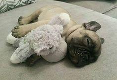 J E F F  Regram of @jeffdreamchaser  . #frenchbulldog #frenchbulldogpuppies #frenchbulldogs #frenchsbulldogsofinstagram #frenchiestagram #dog #frenchies #dogs #dogstagram #dogsofinstagram #pups #pupsofinstagram #puppylove #puppies #bulldog #bulldogpuppy #pet #pets #petstagram #daily_frenchie #petsofinstagram #frenchie #cutepuppy #cuteanimal #cuteanimals #ilovemydog #ilovedogs #doglover #bulldoglove #instadog