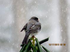 """#WinterinCt"" "" #Centerof Ct ""....Winter in Ct Photo Contest.    Bird on snowy day."