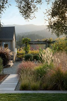 Scott Lewis designed the gardens of this Napa Valley home, which are planted with a huge variety of ornamental grasses. The grass in the top photo is Bouteloua gracilis 'Blonde Ambition': Gardenista has a full list of all the cultivars in the bottom photo.