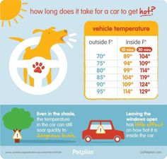 As you know, today is shaping up to be another scorcher so here are some tips from the DDFL.  Help your pet beat the heat during the dog days of summer  In Colorado, we love spending time enjoying all our beautiful state has to offer, often with our furry friends in tow. How can you make sure your pets stay safe when temperatures soar? Follow these simple tips to help your pets beat the heat during the dog days of summer.     NEVER leave your pet in a parked car  Even if you are parked in…