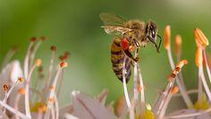 Bienensterben: ausgesummt? ♡ Fairwandlung #bienen #bees #umwelt #umweltschutz #tiere