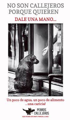 muchos callejeros son perros abandonados...