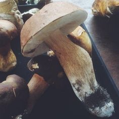 We visited Delheim to forage for delicious and medicinal mushrooms. Outdoor Activities, Stuffed Mushrooms, Outdoors, Stuff Mushrooms, Outdoor Rooms, Off Grid, Outdoor, Field Day Activities