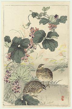 Kono Bairei (1844 - 1895) Japanese Woodblock Print Quail