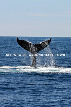Whale season in Cape Town is as exciting for locals and tourists as it is for the whales, so we've picked five of the best ways to see whales around Cape Town. Whales, Cape Town, Stuff To Do, Good Things, Whale
