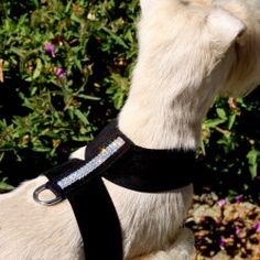 Giltmore Triple Row Swarovski Crystal Dog Harness   Susan Lanci Harnesses at GlamourMutt.com