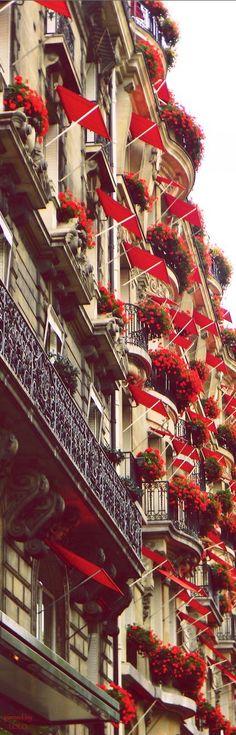 Fleurs écarlates brillants le long de l'avenue Montaigne à Paris