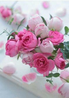 Beautiful Rose Flowers, Love Rose, Amazing Flowers, My Flower, Beautiful Flowers, Pink Roses, Pink Flowers, Good Morning Flowers, Flower Wallpaper