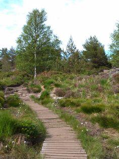 My Favorite Hike in Bergen, Norway : The Lyderhorn | Journey & Camera