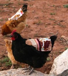 """These beautiful, reversible chicken saddles or """"back packs"""" are an absolute lifesaver when you keep a flock of chickens because the saddles protect your hensfr"""