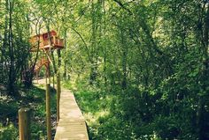 Nueve cabañas para dormir en los árboles en España