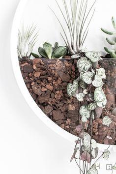 Blumentopf-Wanduhr mit Tillandsien und Sukkulenten DIY