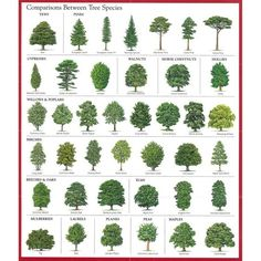 pine tree identification chart joyofmusic info, the gallery for gt female pine cone vs, pine cone spiral, virginia living museum so you found a snake in your yard, 6 trees every survivalist should know why the prepper dome