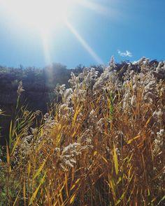 Midday October. Colorado. by larkandfox