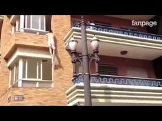 marito e moglie litigano ma guardate bene chi scende dalla finestra #videodivertenti