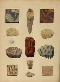 Biology Art, Natural Curiosities, Natural World, Fossils, Vintage World Maps, Flora, Sketches, Graphic Design, Ink