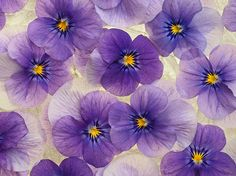 Floating flowers   Flickr - Photo Sharing!